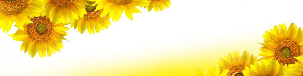 wildflowers-021