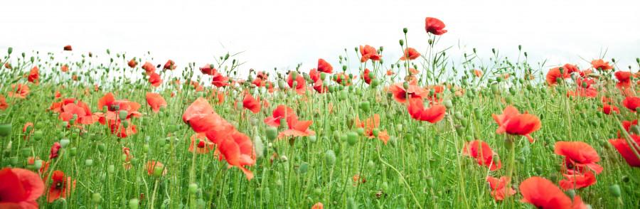 wildflowers-056