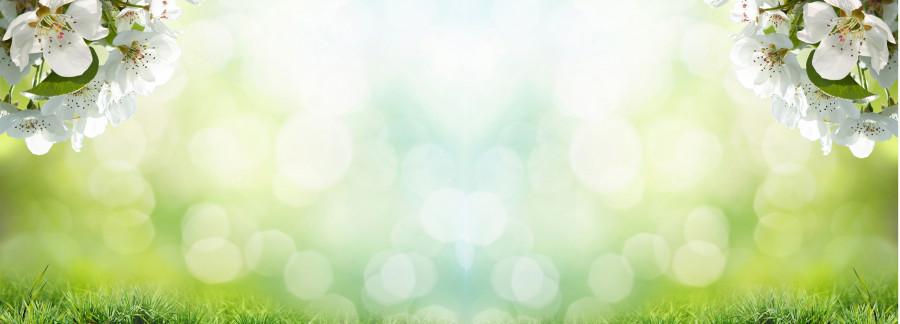 flowering-trees-036
