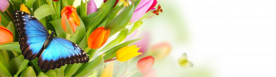 tulips-073