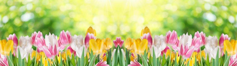 tulips-056