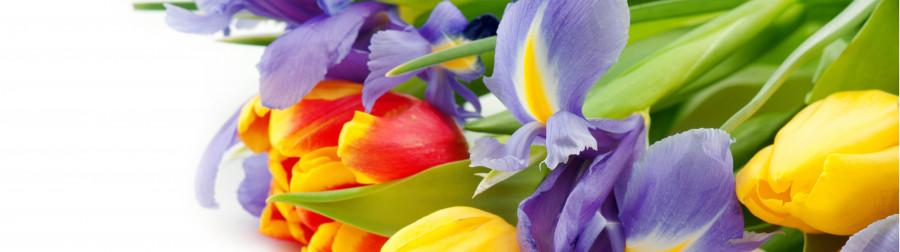 tulips-039
