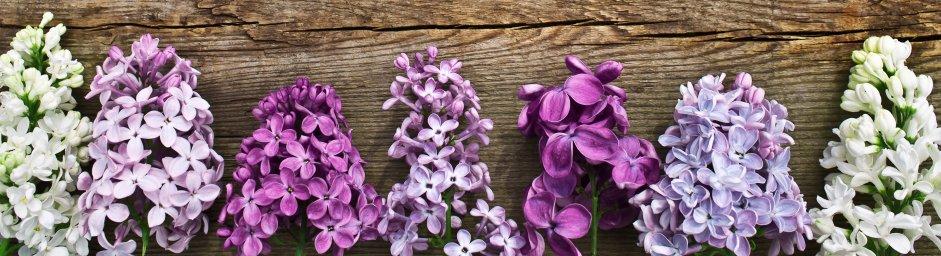 flowering-trees-060