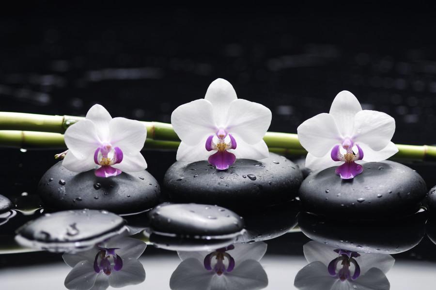 orchids-091