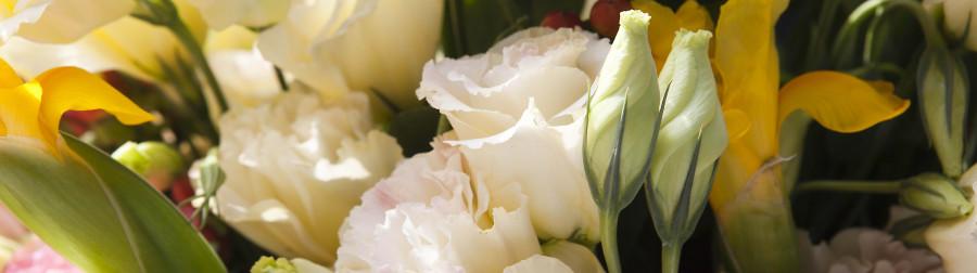 roses-035