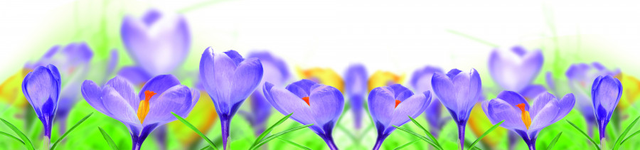 wildflowers-019