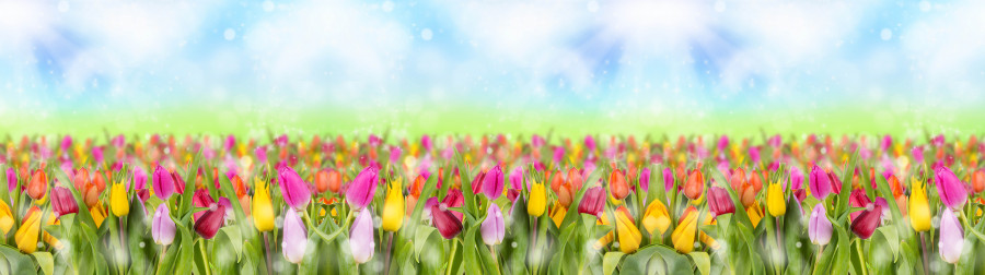 tulips-028
