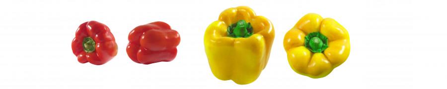 vegetables-089