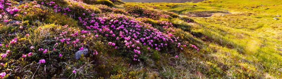 wildflowers-082