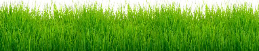 bamboo-plants-147