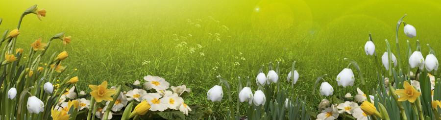 wildflowers-081