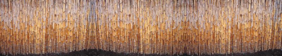 bamboo-plants-131