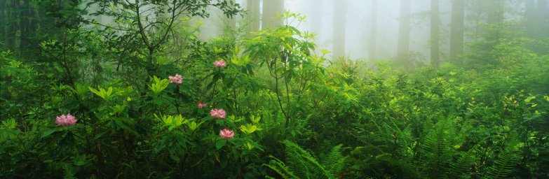 wildflowers-067