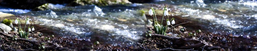wildflowers-098
