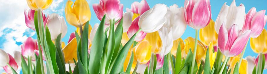 tulips-067