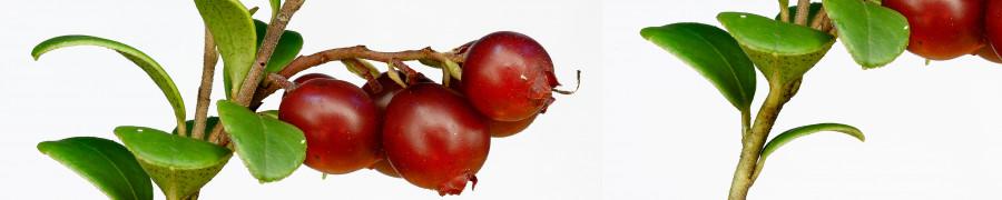 fruit-174