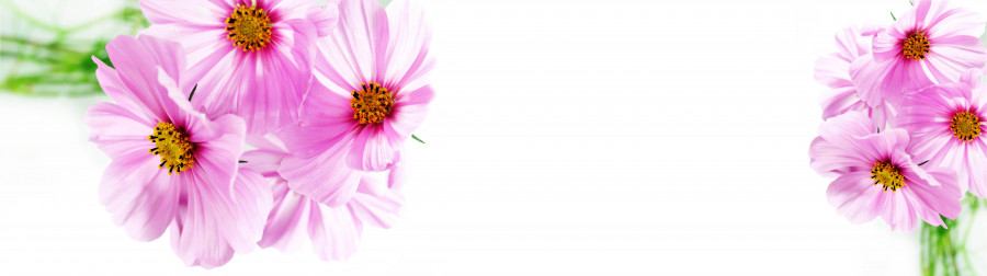 other-flower-056