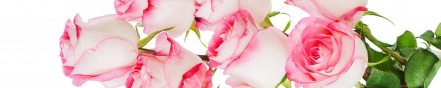 roses-008