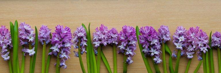 wildflowers-057