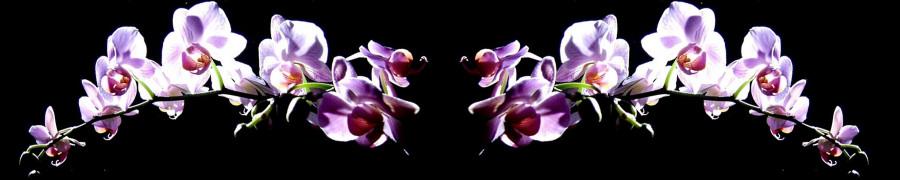 orchids-065