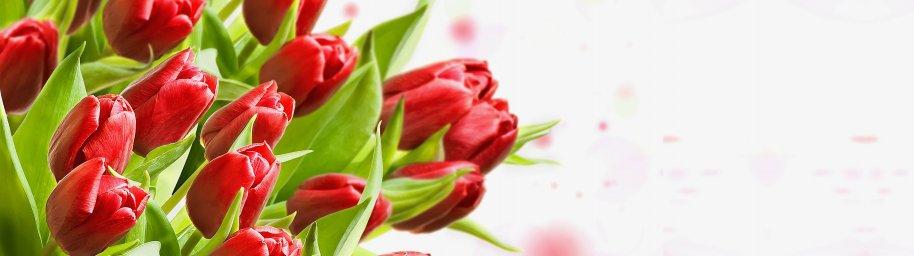 tulips-076