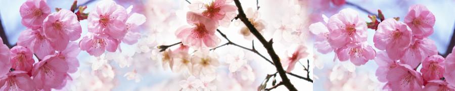 flowering-trees-043