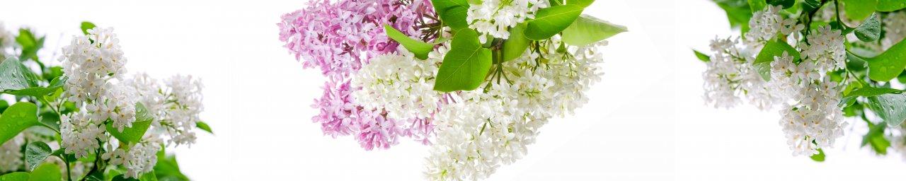 flowering-trees-045