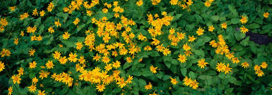 wildflowers-071