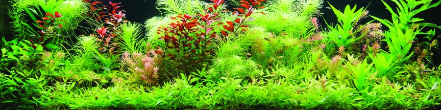 bamboo-plants-109