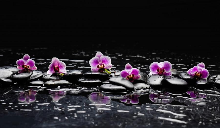 orchids-094
