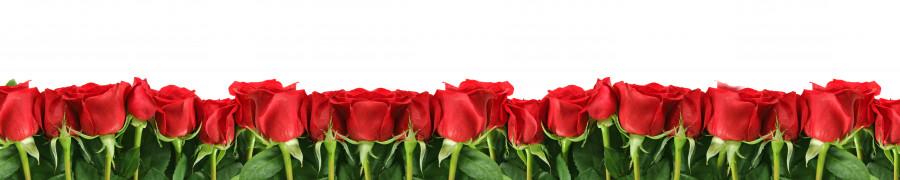 roses-045
