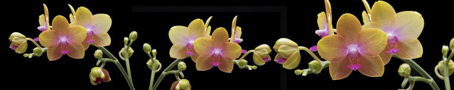 orchids-082