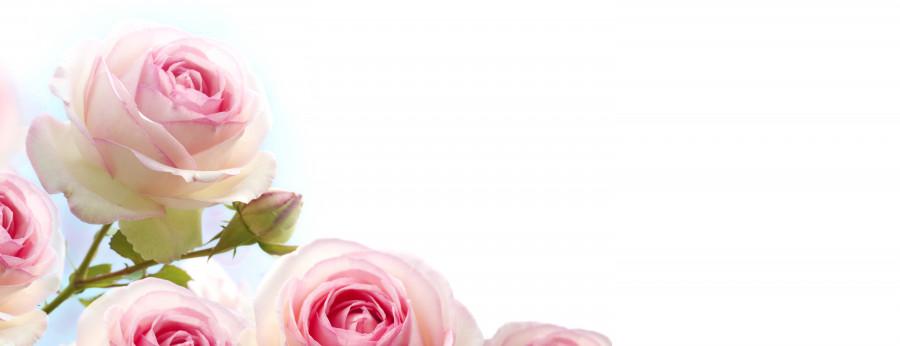 roses-002