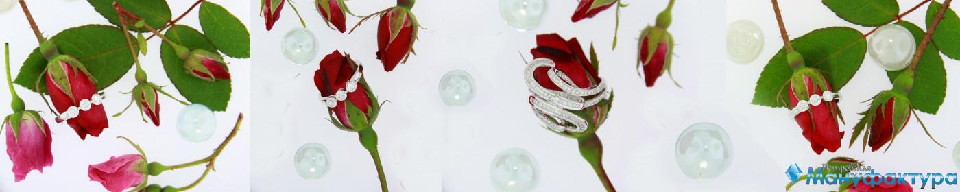 roses-042
