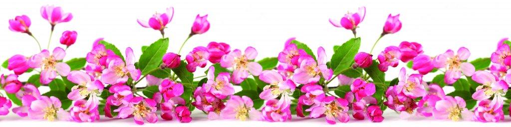 flowering-trees-013