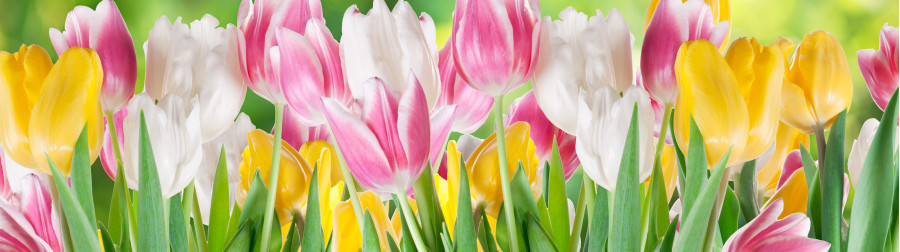 tulips-003