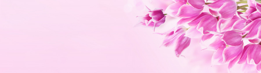 tulips-059