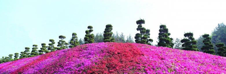 wildflowers-054