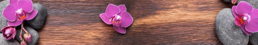 orchids-038