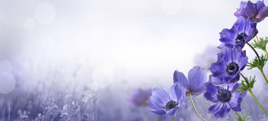 wildflowers-023