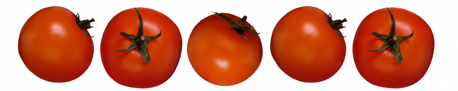 vegetables-053