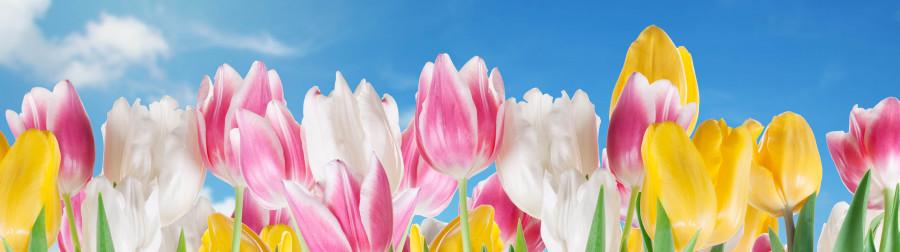 tulips-038