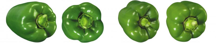 vegetables-033