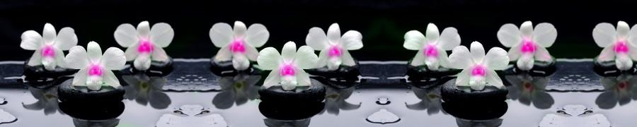 orchids-046