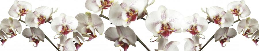orchids-087