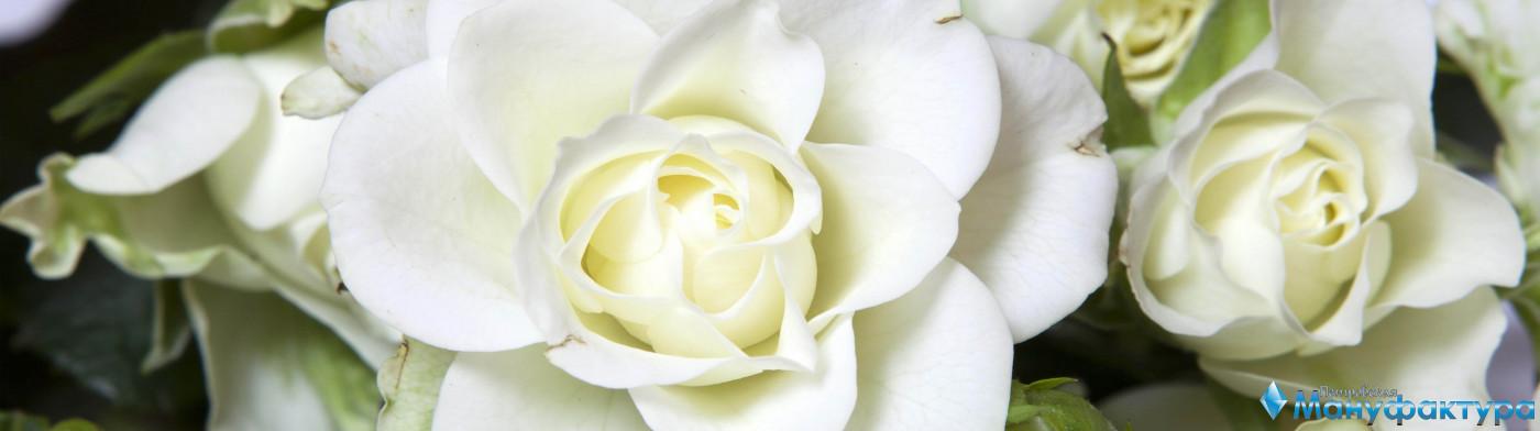 roses-015
