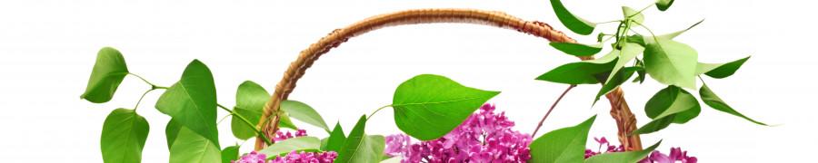 flowering-trees-081