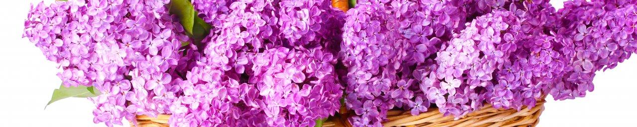 flowering-trees-049