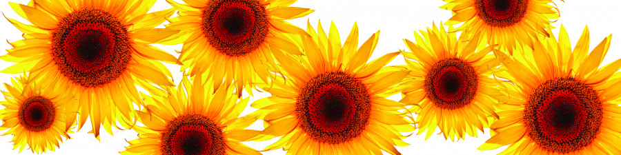 wildflowers-088