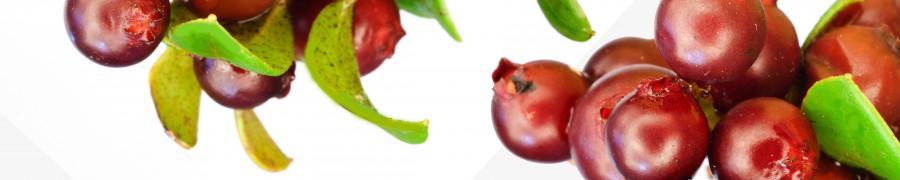 fruit-172